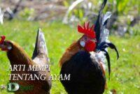 arti mimpi ayam